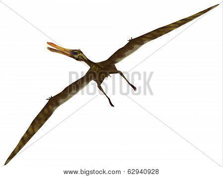 Anhanguera Flight On White