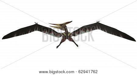 Pteranodon Flight On White