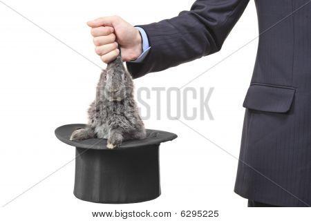 Mano sosteniendo un conejo
