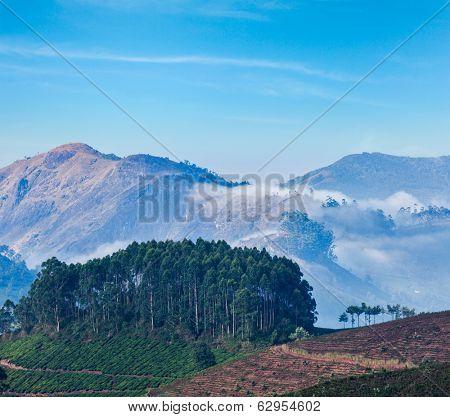 Kerala India travel background - sunrise and tea plantations in Munnar, Kerala, India