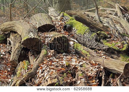 Stack Of Rotten Wood