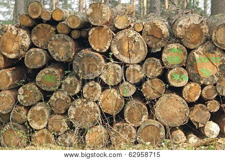 Woodpile With Damage
