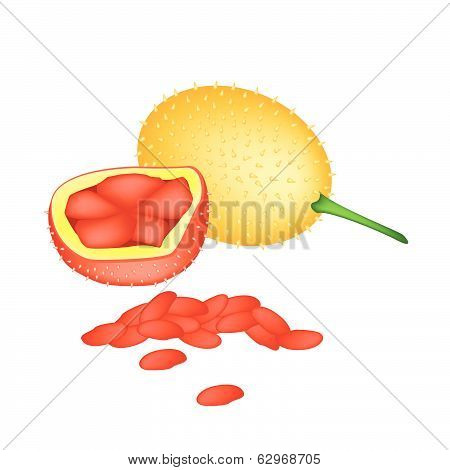 Fresh Orange Baby Jackfruits On White Background