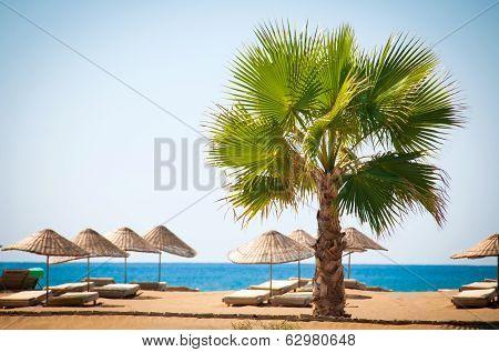Sea Resort, Scenic Sandy Beach With Palm Trees