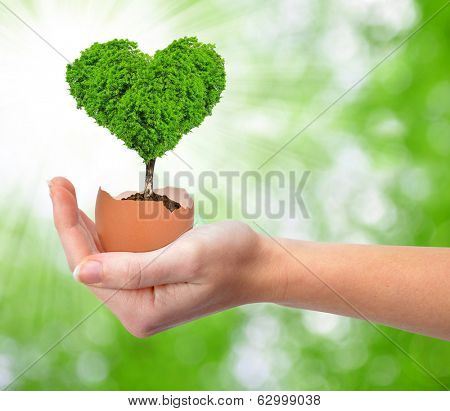 Hand holding tree in the shape of heart growing out of the egg .New life concept.