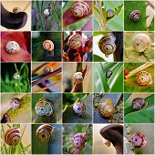 picture of garden snail  - Colorful Collage with Garden snail close up - JPG