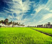 pic of tamil  - Vintage retro hipster style travel image of rural Indian scene  - JPG