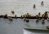 picture of bee keeping  - close - JPG