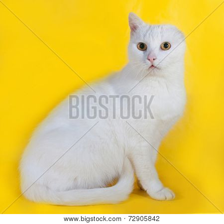 White Cat Without One Ear On Yellow