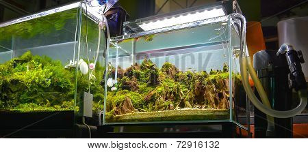Image Of Water Plant Tank And Freshwater Fish