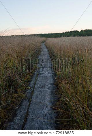 Duckboards on a swamp