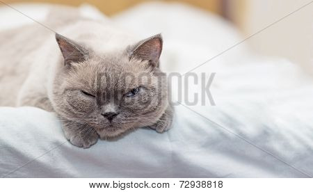 Cat Lies On A Bed And Looking With Interest