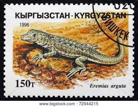 Postage Stamp Kyrgyzstan 1996 Steppe-runner, Lizard