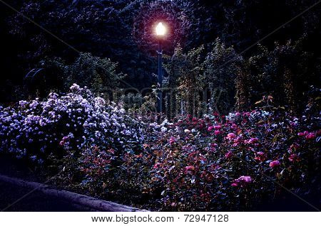 Rose Garden At Night