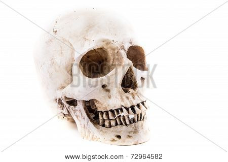 Isolated Human Skull