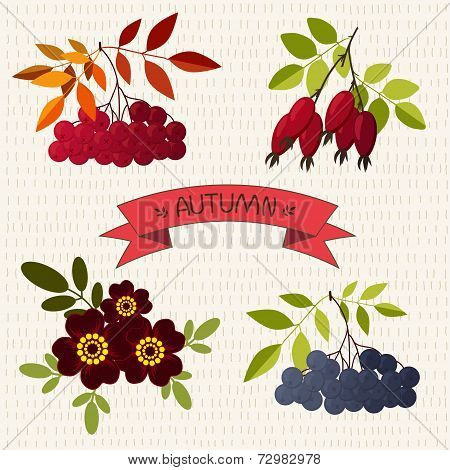 Autumn. Mountain ash, chokeberry, rose, marigold