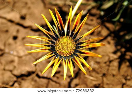 Beautiful flower on a dirty ground background