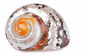 foto of cockle shell  - close up of the seashell shell isolated on white background - JPG