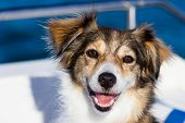 foto of cross-breeding  - Happy dog on a boat in the summertime - JPG