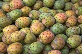 pic of nopal  - Close up detail view at the prickly pears - JPG