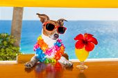 pic of mexican-dog  - funny cool dog drinking cocktails at the bar in a beach club party with ocean view - JPG