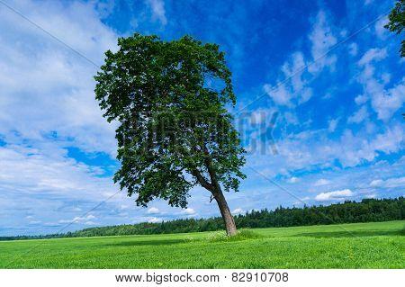 Field Landscape Lonely Tree