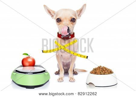 Healthy Hungry Dog