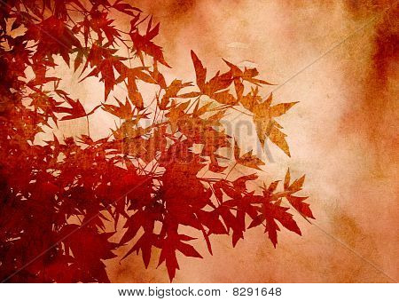 Textured decorative leaves of sweetgum for background or scrapbooking