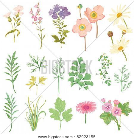 Set of Flowers and Herbs - hand drawn watercolor style - in vector
