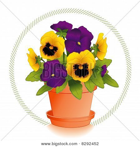 Gold and Purple Pansies