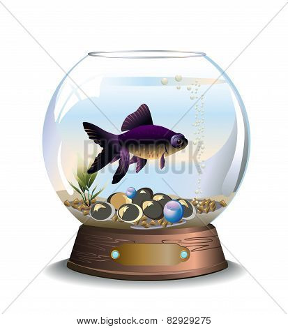 Round aquarium with one fish