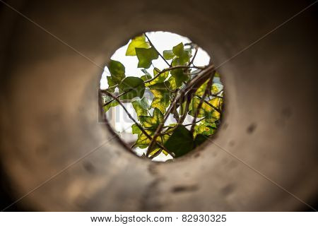 View From Concrete Pipe On Growing Plants