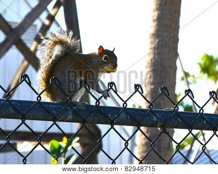 The Squirrel Has Her Peanut