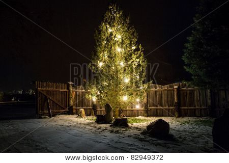 Big Christmas Tree Decorated By Lights At Night