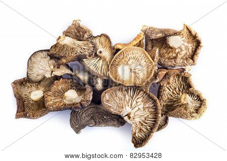 Dried Mushrooms Isolated On White Background