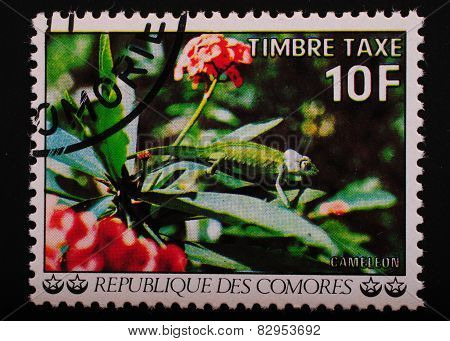 Comoros - Circa 1977 Year: Postage Stamp Printed Comoros Shows Image Lizard Chameleon On Exotic Plan