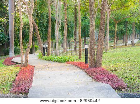 Concrete Walk Way In The Garden