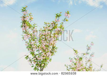 Spring Flowering Tree Against The Sky