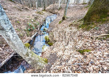 Mountain Landscape With Brook In Forest In Spring