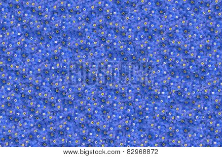 Forget-me-not Background