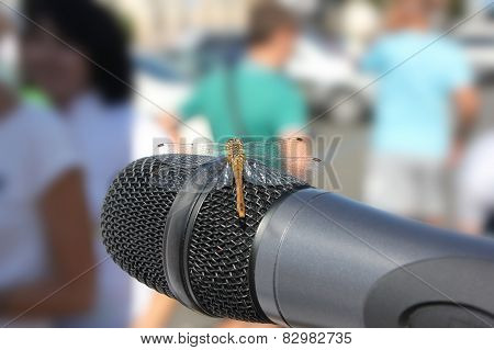Dragonfly At The Microphone