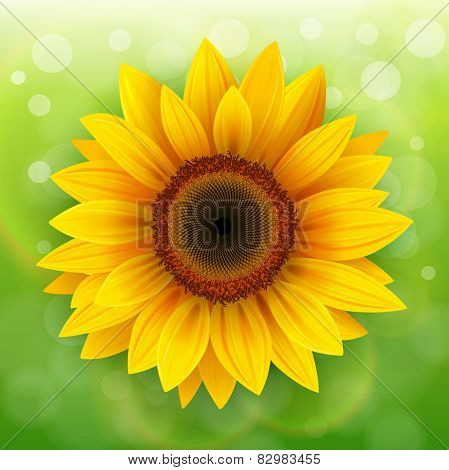 Nature Background with sunflower over green bokeh background.