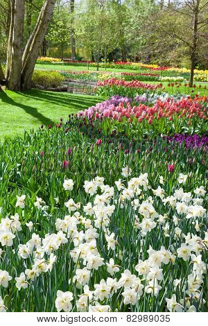 Beautiful spring garden in Keukenhof. Netherlands.