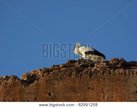 Stork on top of a wall