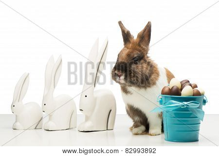 Bunny with chocolate eggs and rabbit figurines