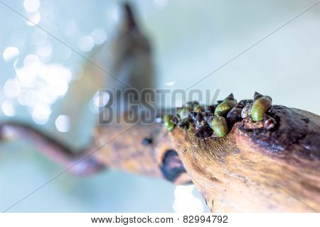 Snail wood water