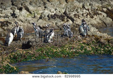 Penguins on Chiloé
