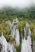 image of gunung  - limestone pinnacles formation at gunung mulu national park borneo malaysia - JPG