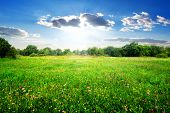 picture of meadows  - Field flowers on a beautiful spring meadow - JPG