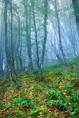 stock photo of fog  - Mysterious forest with fog in spring  - JPG